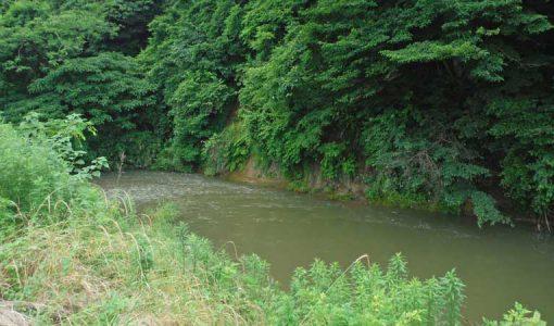 森下川の写真