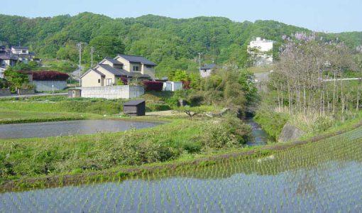 金腐川の写真
